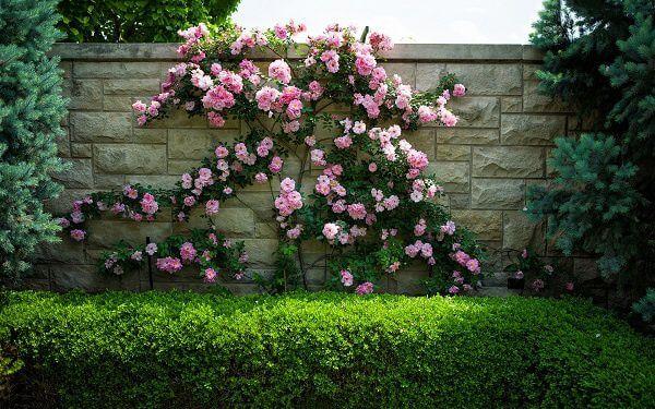 Hàng rào cây trồng bằng gạch thô xám cùng hoa