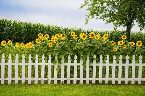 hàng rào cây trồng bằng gỗ kết hợp vs cây xanh