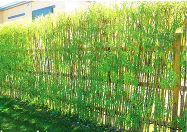Hình ảnh hàng rào cây trồng phong cách cổ điển